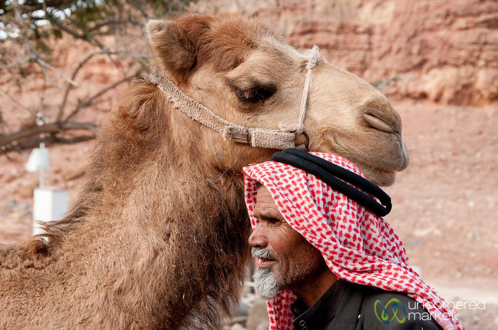 A Bedouin and his Camel - Feynan, Jordan