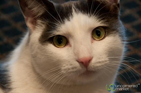 Dudley the Super Cat