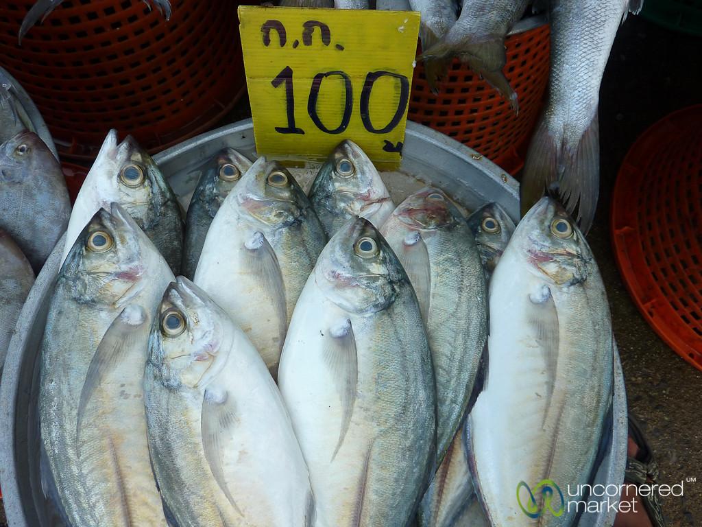 Fresh Fish Straight from Fishermen - Koh Samui, Thailand