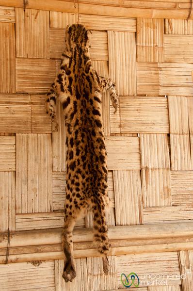 Wild Cat - Bandarban, Bangladesh