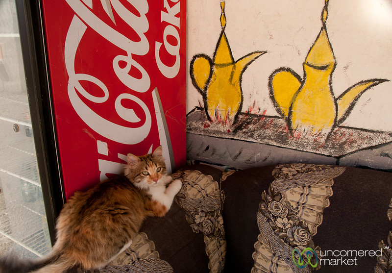 Cafe Cat - Jordan
