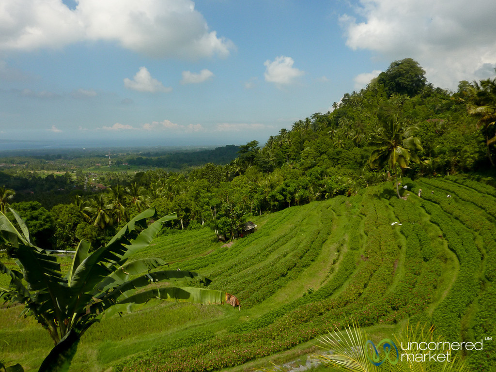 Flower Plantation on the HIll - Bali, Indonesia
