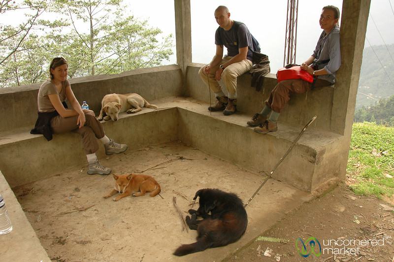 Taking a Break with our Canine Friends - Yuksom, Sikkim