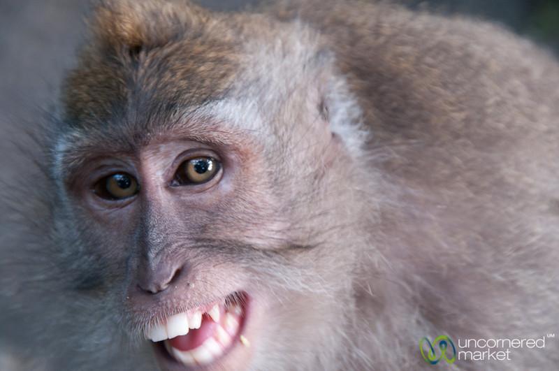 Monkey Smile - Ubud, Bali