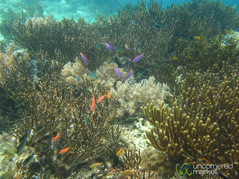 Colorful Fish Swimming above Coral - Menjangan Island, Bali