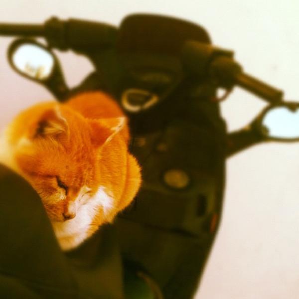 Cat nap #Crete