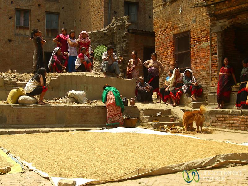 Drying Grain in the Sun in  Bhaktapur, Nepal