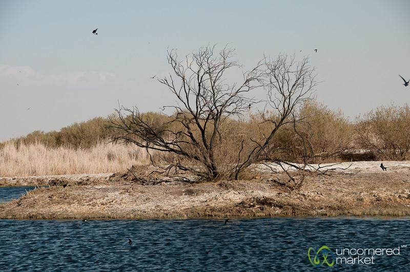 Azraq Wetlands Reserve - Jordan