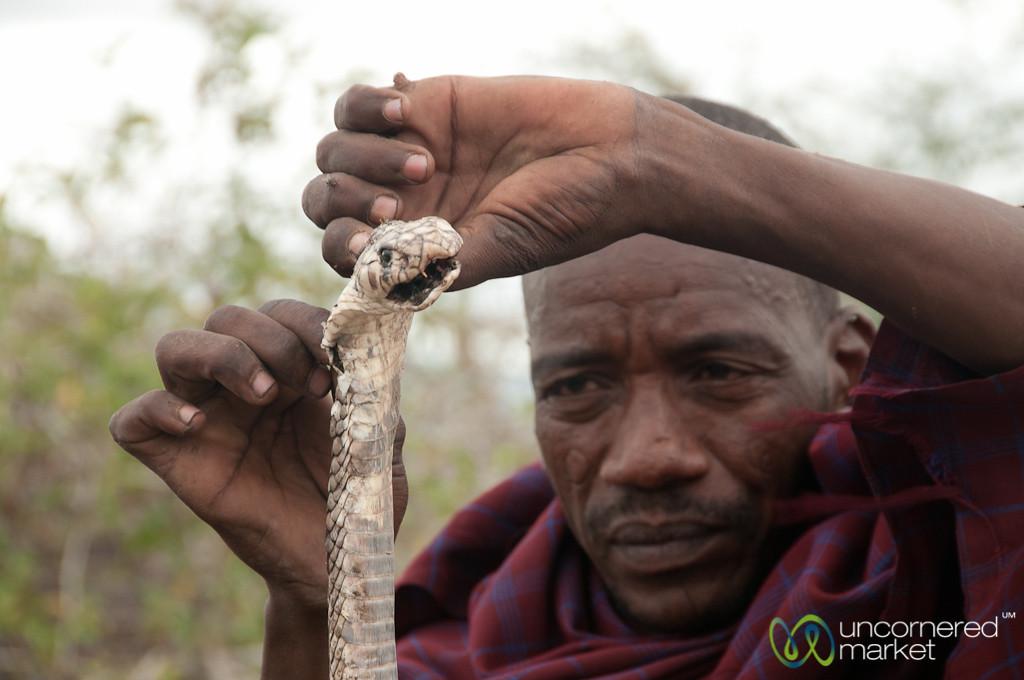 Egyptian Cobra and Masai Man - Lake Manyara, Tanzania