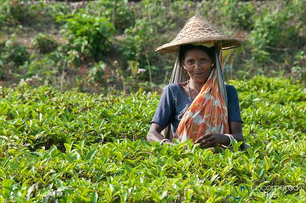 Tea Picker Outside of Srimongal, Bangaldesh