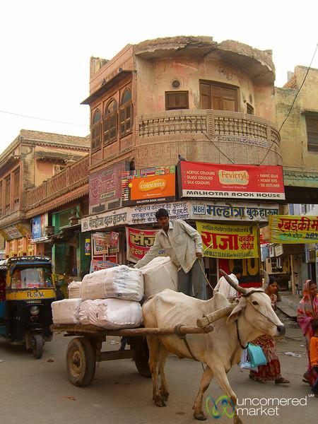 Ox Cart Through Bikaner, India