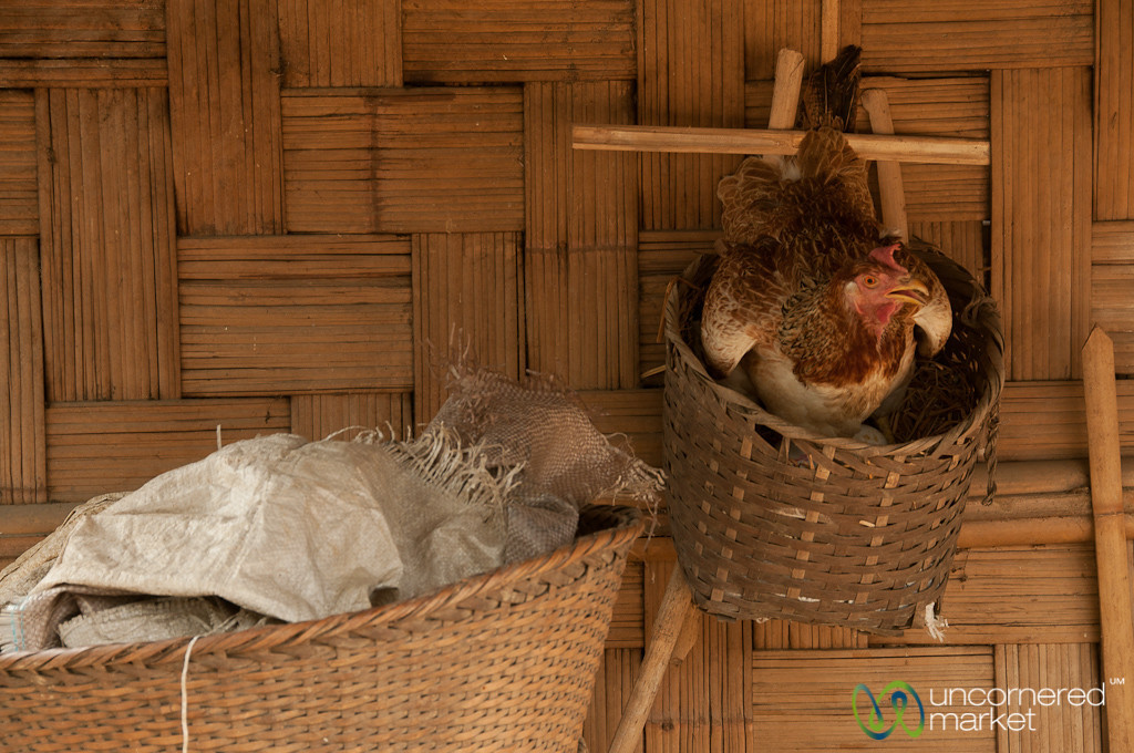 Chicken in Basket - Bandarban, Bangladesh