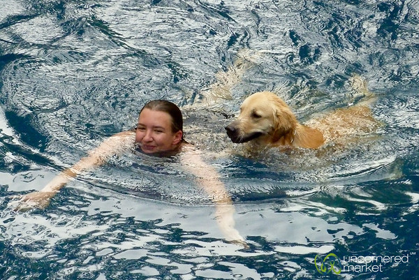 Swimming Dog - Koh Samui, Thailand