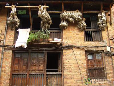 Garlic Drying Time - Bhaktapur, Nepal
