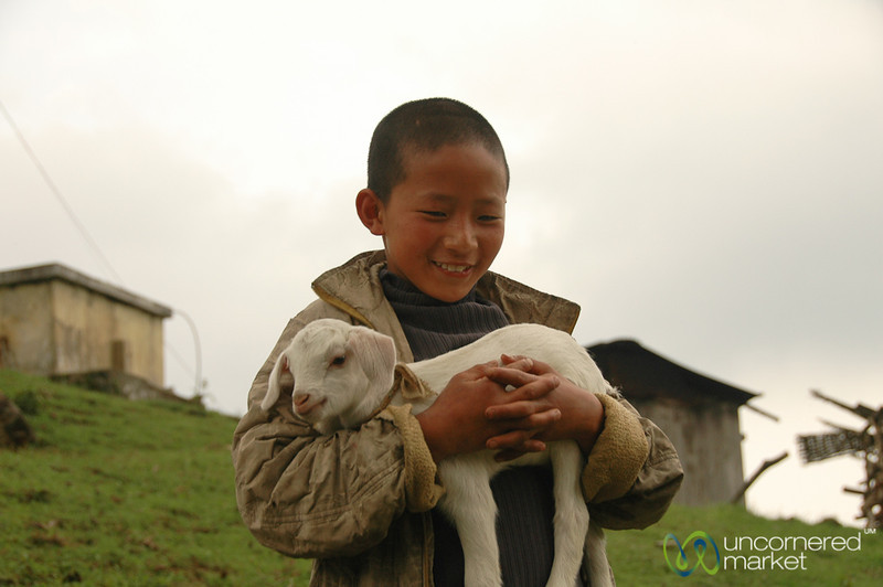 A Boy and his Baby Goat - Lake Khecheopalri, Sikkim