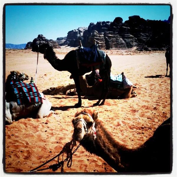 Camel rest stop - Wadi Rum, Jordan
