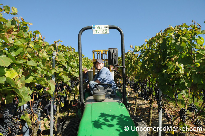 Matthias on the Tractor - Bickel-Stumpf Winery near Thüngersheim, Germany