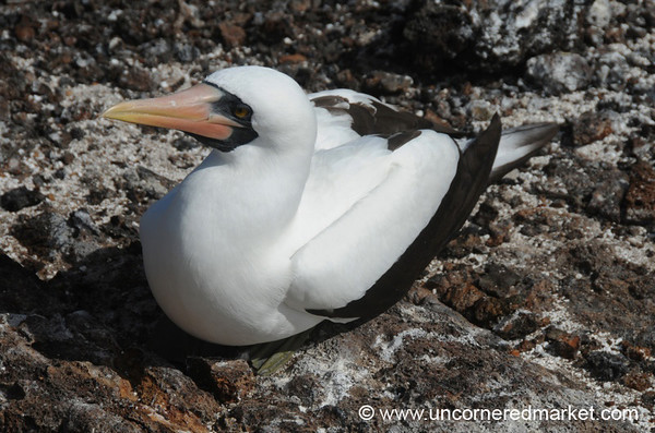 Sitting Pretty - Galapagos Islands