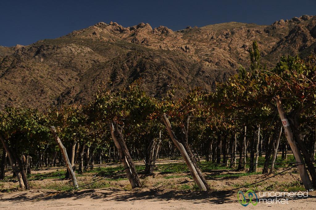 Wineries Near Cafayate, Argentina