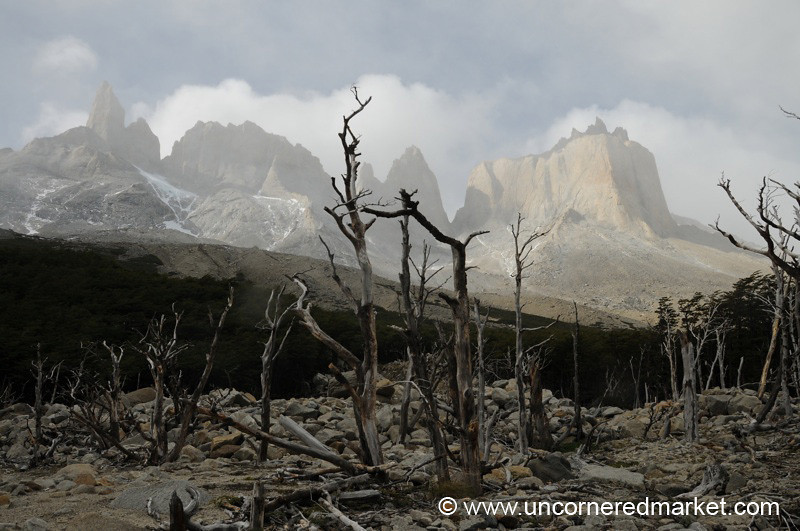 Las Torres and Dying Trees - Torres del Paine, Chile