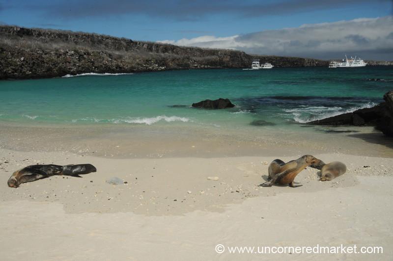 Sea Lion Sun - Galapagos Islands