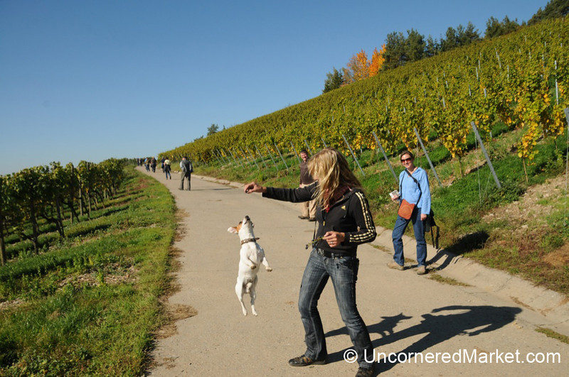 Willy, the Jumping Dog - Thüngersheim, Germany