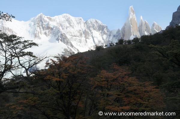 Turning Leaves at El Chalten, Argentina