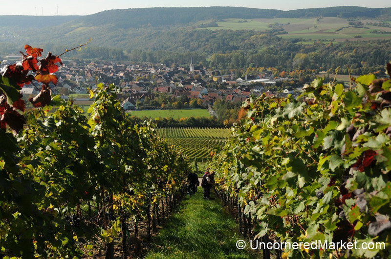Vineyards Above Thüngersheim - Northern Bavaria, Germany