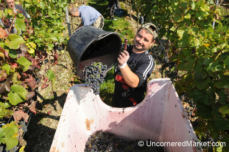 Working With a Smile - Bickel-Stumpf Winery in Thüngersheim, Germany