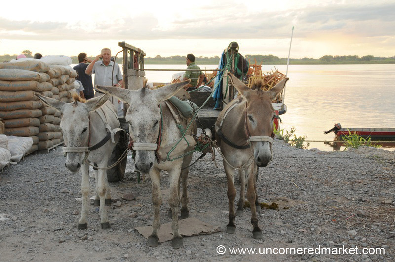 Donkey Power - Boat Trip on the Rio Paraguay.