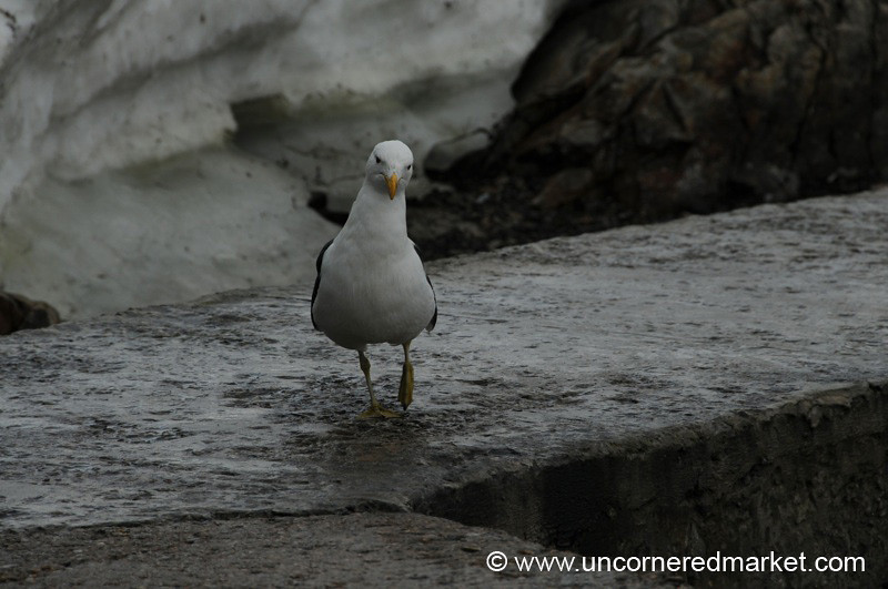 Curious Sea Bird - Antarctica
