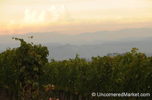 Dusk Over Montalcino Vineyards - Tuscany, Italy