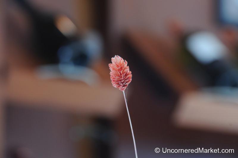 A Simple Flower - Bodega Familia Schroeder outside Neuquen, Argentina