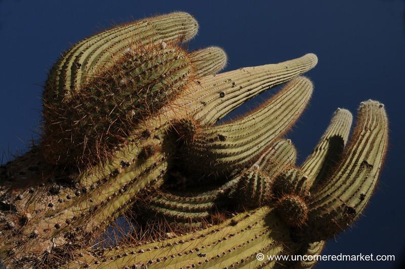 Mighty Cactus - Cafayate, Argentina