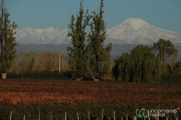 Mendoza Vineyards Below the Andes - Mendoza, Argentina
