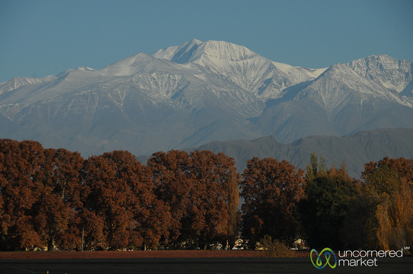 Autumn Colors Below the Andes - Mendoza, Argentina
