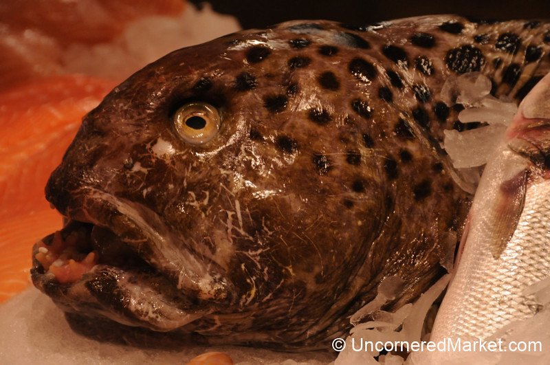 Pretty Face of a Wolf Fish - Berlin, Germany