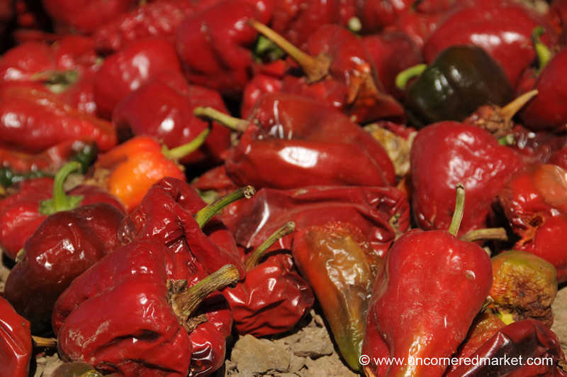 Hot Chilies in the Sunshine - Northern Argentina