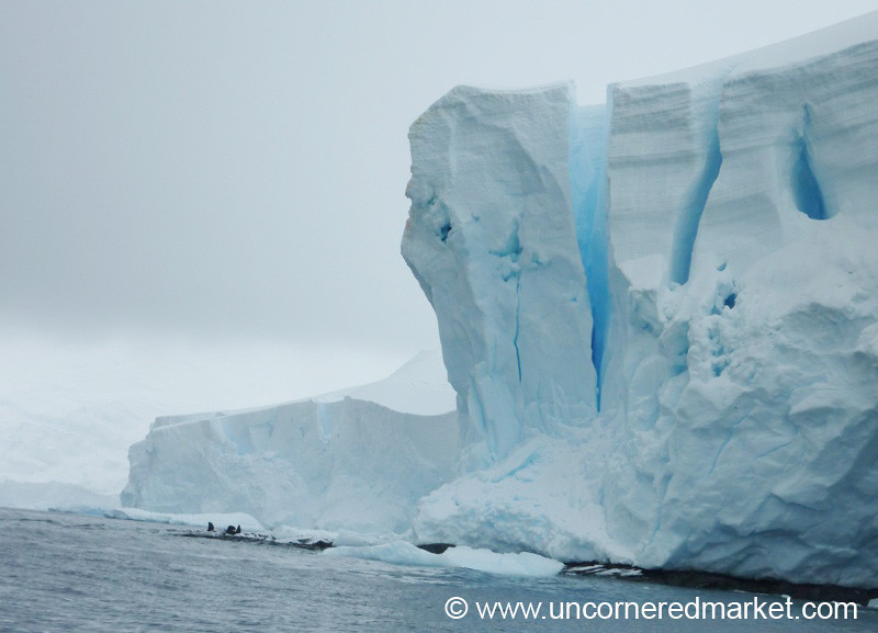 Seals and Blue Ice - Hanusse Bay, Antarctica