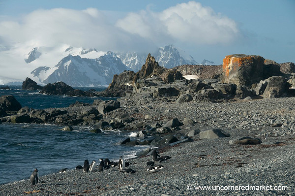 Penguins By the Water at Half Moon Island - Antarctica