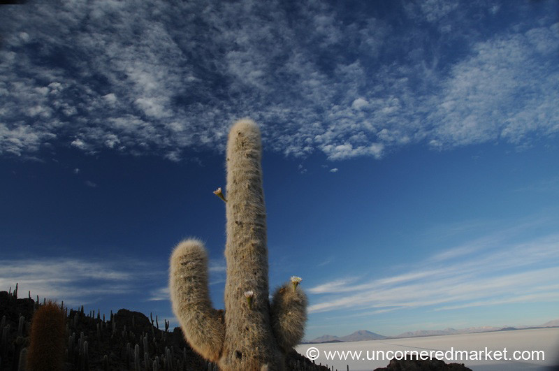 Cactus Sky - Isla del Pescado