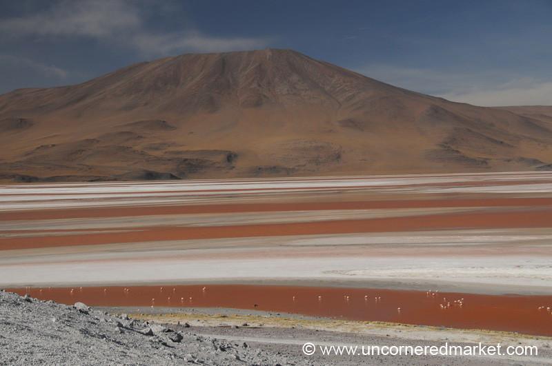 A Spot of Birds at Laguna Colorado - Salar Tour, Bolivia