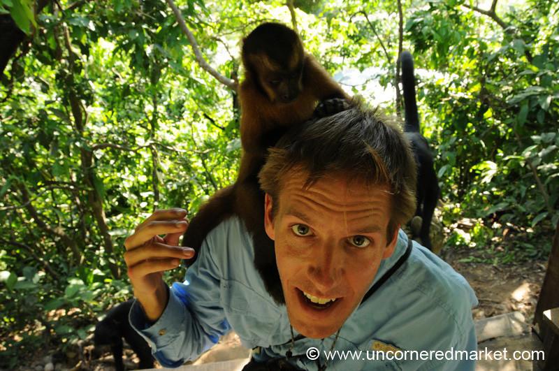 More Monkey Grooming - Inti Wara Yassi in Bolivia