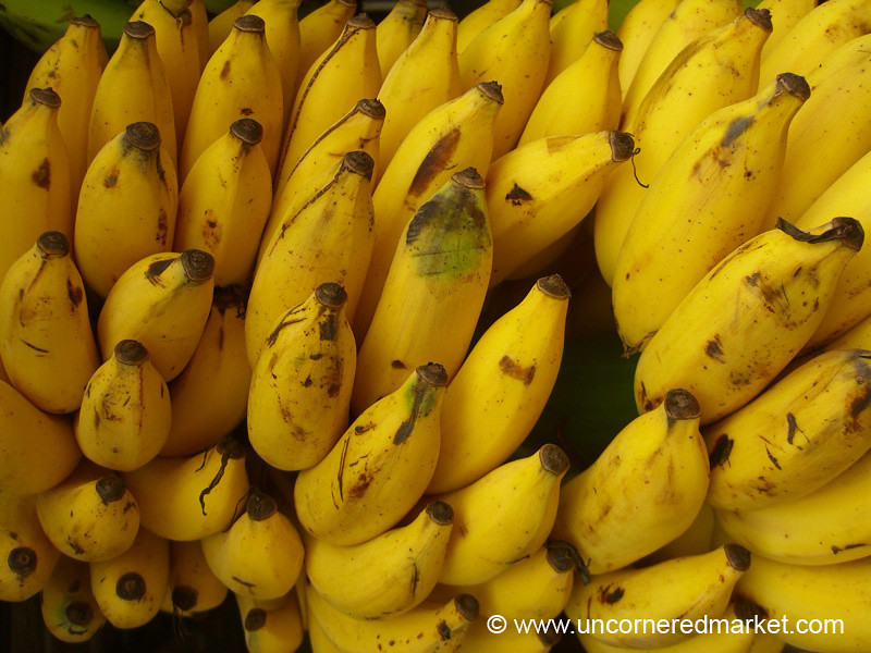 Going Bananas: Alleppey, India
