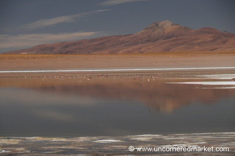 Desert Lake Reflections - Salar Tour, Bolivia