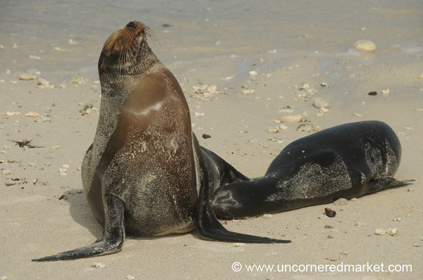 Looking for Lunch - Galapagos Islands
