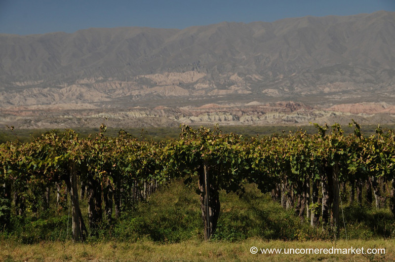 Vineyards and Mountain Scenery - Cafayate, Argentina