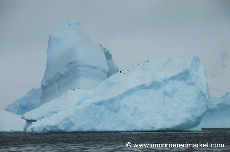 Birds Resting On Top of the Ice - Antarctica