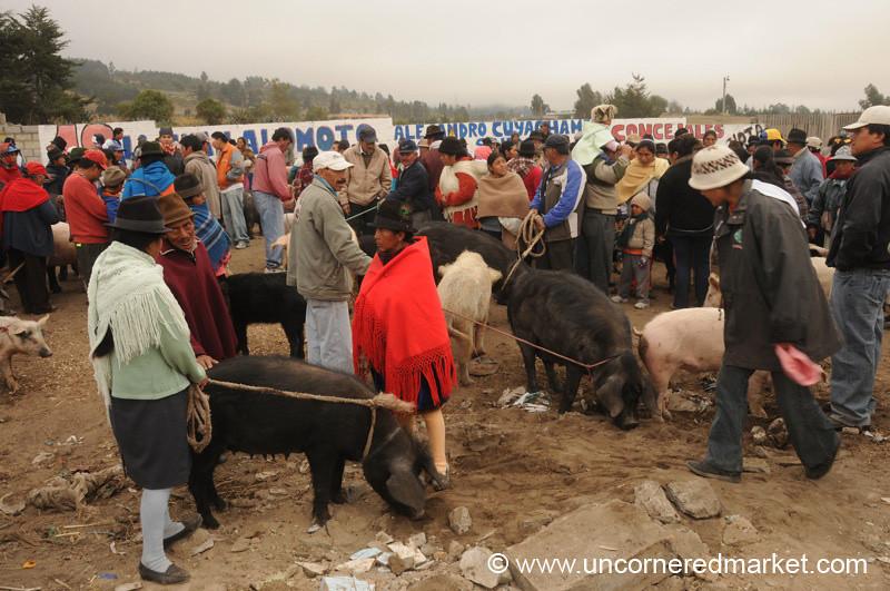 Saquisili's Animal Market - Ecuador