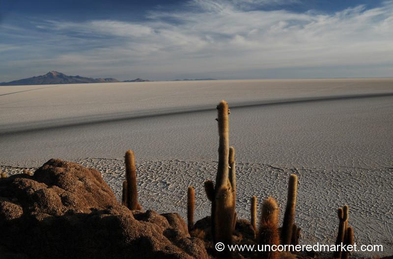 Cactus Morning Saltscape - Salar de Uyuni, Bolivia